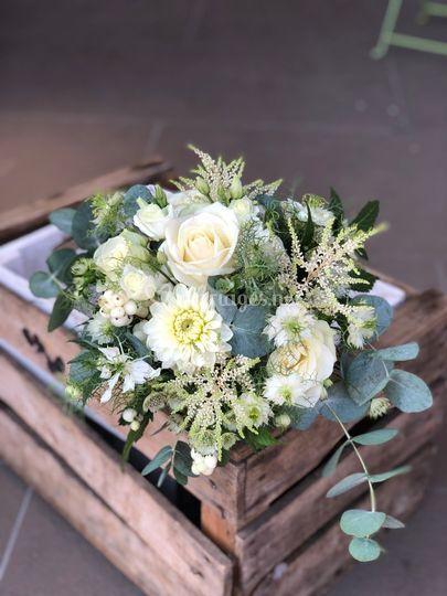 Blanc eucalyptus