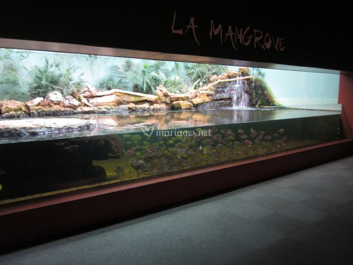 Bassin Mangrove