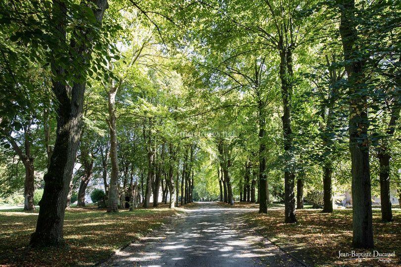 Allée d'arbres centenaires