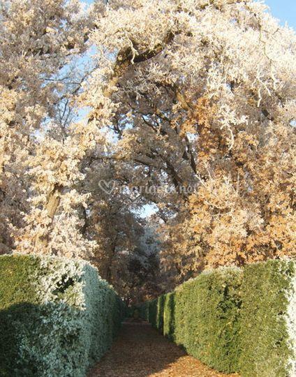 Chemin couvert de beaux arbres