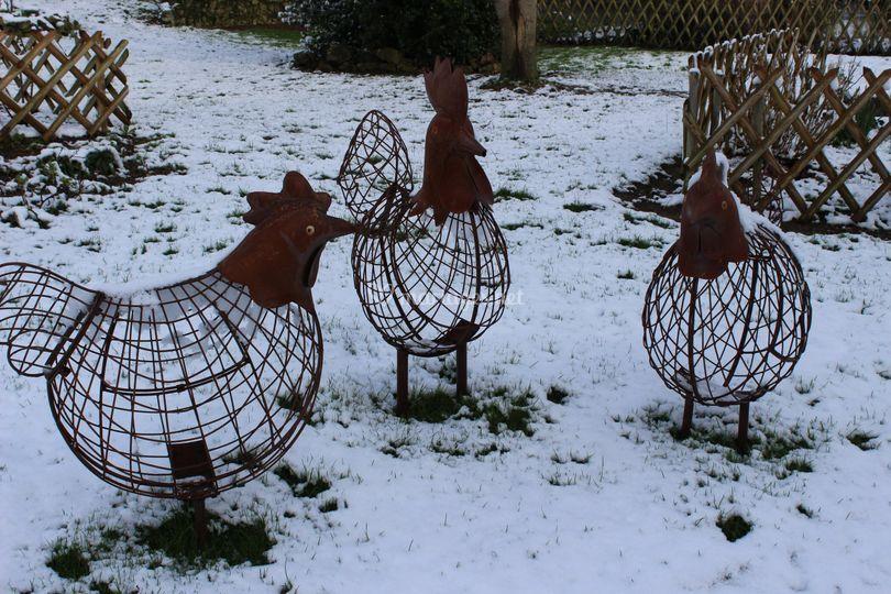 Coq et poules vous accueillent