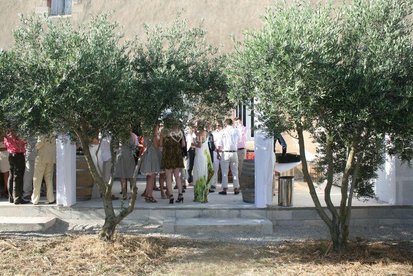 Un jardin d'oliviers