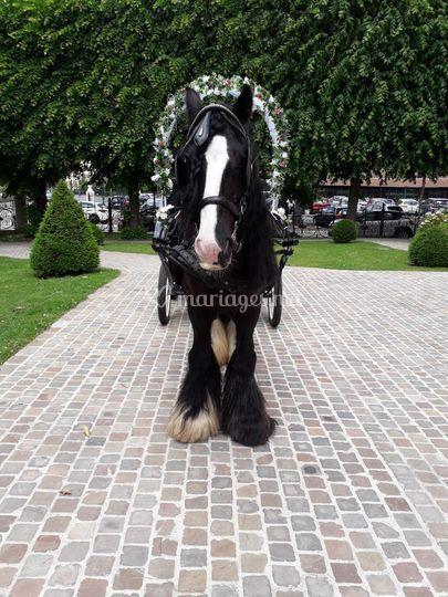 Notre beau cheval