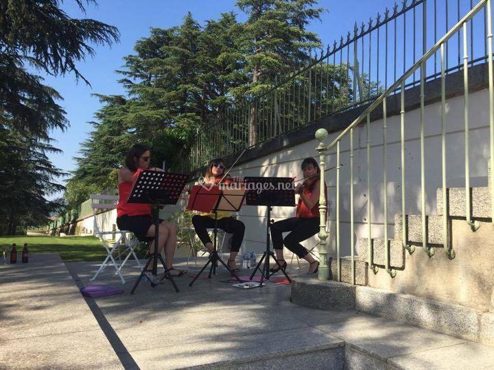 Trio violon
