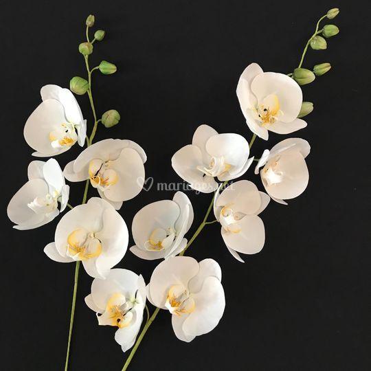 Orchidées en sucre