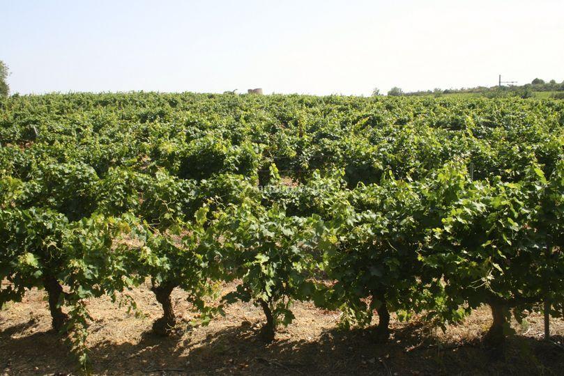 Complexe viticole unique