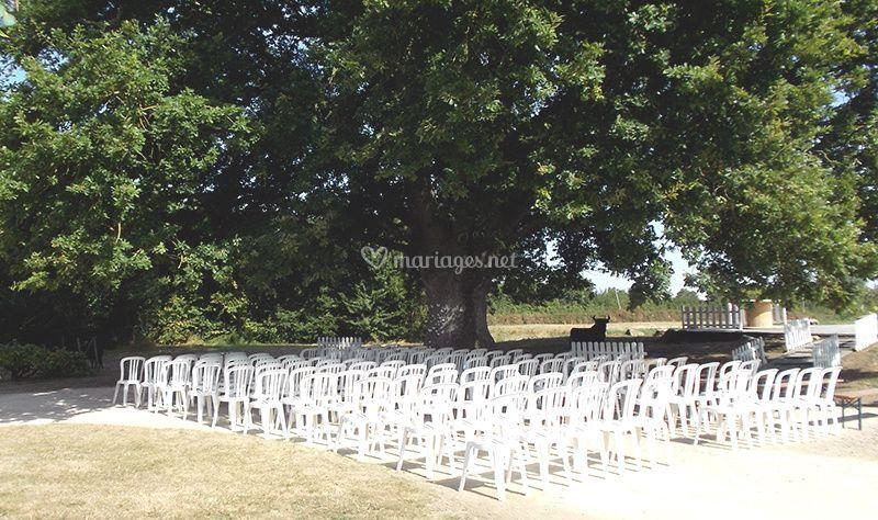 Un chêne centenaire dans parc