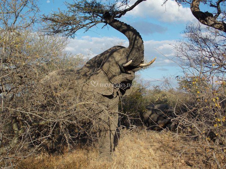 Esprit Masai Afrique Du Sud