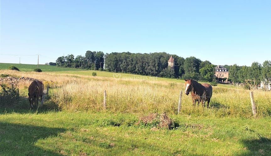 Vue champs et pâture