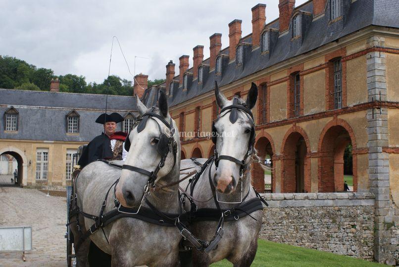 Le cocher et ses chevaux