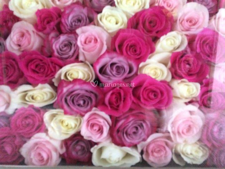 Méli mélo de roses