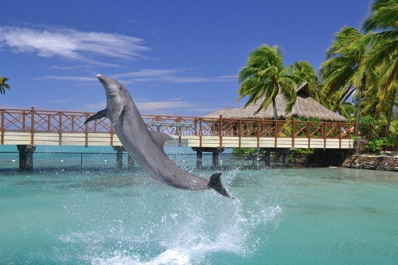 Dolphin Center Moorea