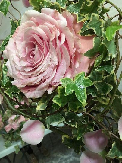 Rose composition