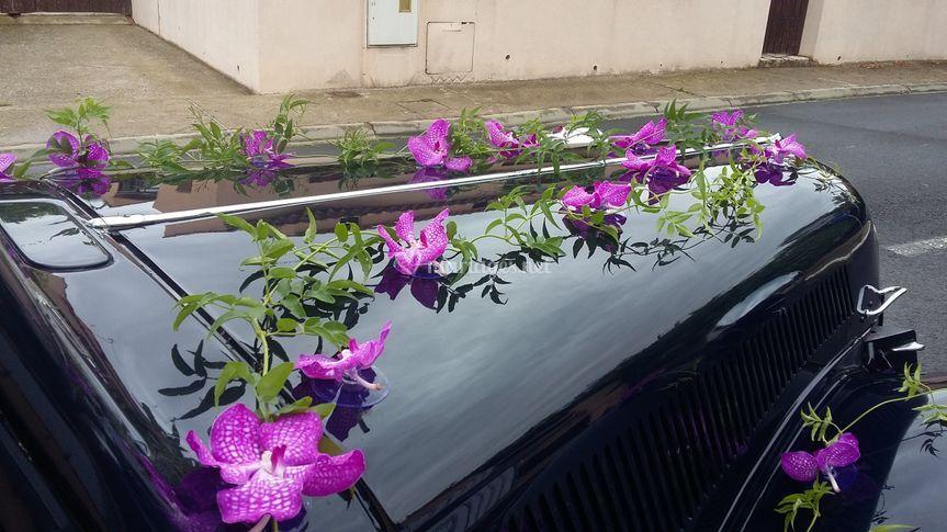 Décoration voiture orchidée