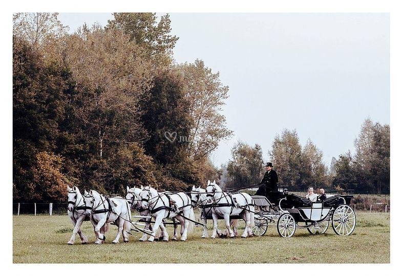 Landau attelé à 6 chevaux
