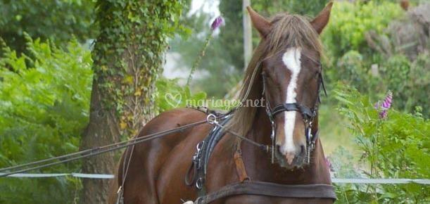 Les chevaux de Ar Manège