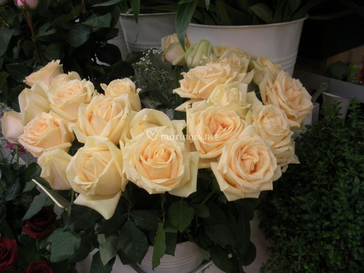 Roses orange saumon