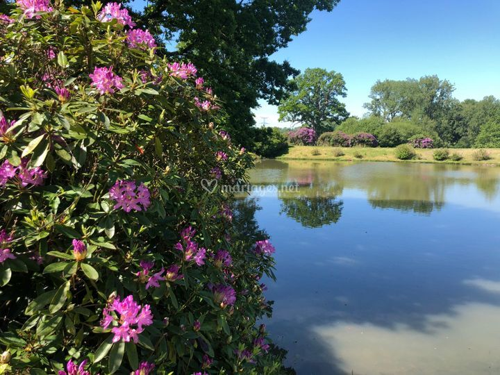 Vue partielle sur étang princi
