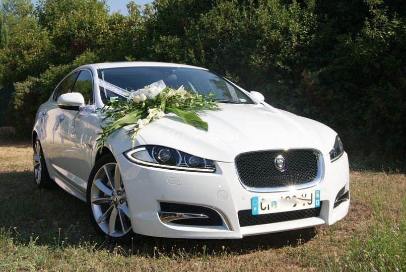 Jaguar décorée