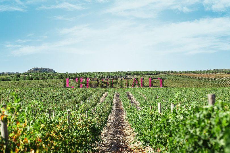 Au cœur des vignes du massif