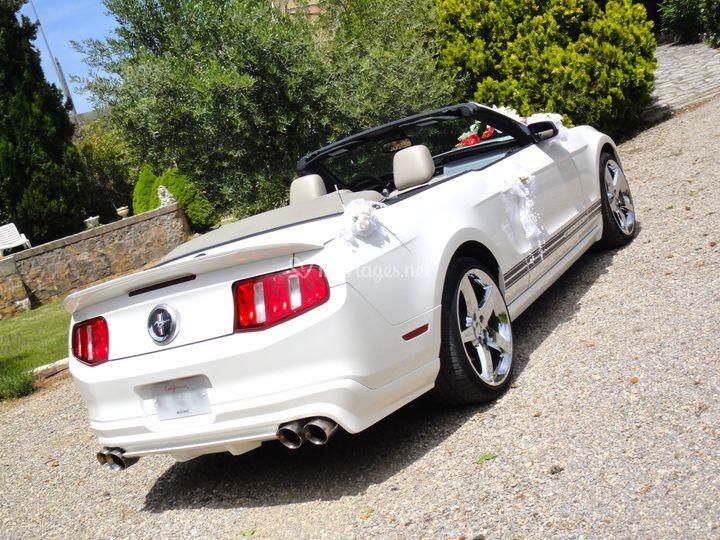 Mustang arrière