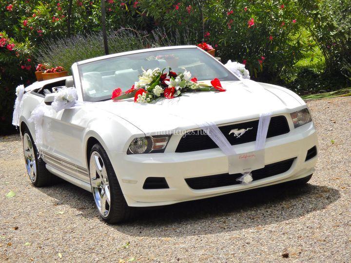 Mustang avant