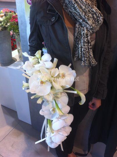Chute d'orchidée