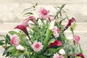 Calleis fleurs