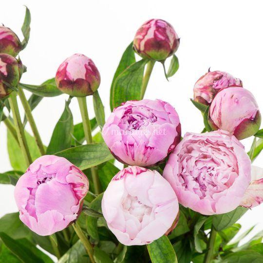 Sélection de fleurs coupées
