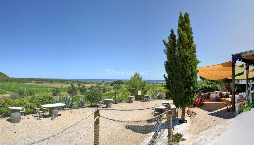 Vue panoramique mer et vignes