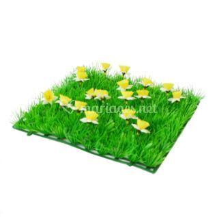 Carré d'herbe Jonquilles