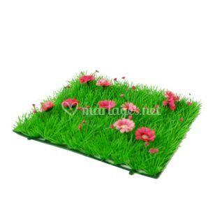 Carré d'herbe paquerettes roses