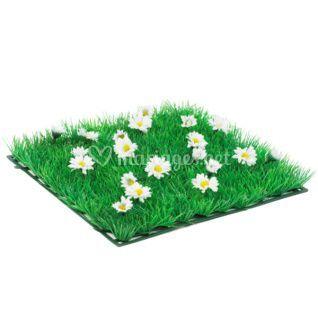 Carré d'herbe paquerettes blanches