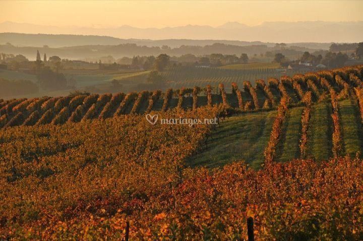 Un domaine au coeur du vignoble