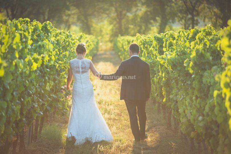 Photos dans les vignes