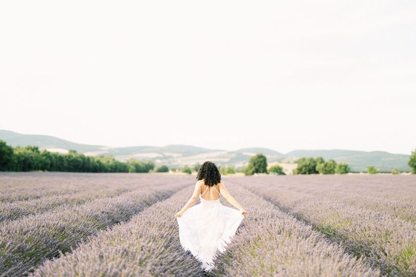 In lavander fields