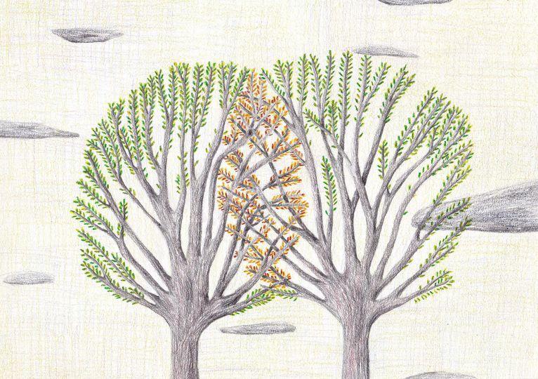 Dessin original arbres