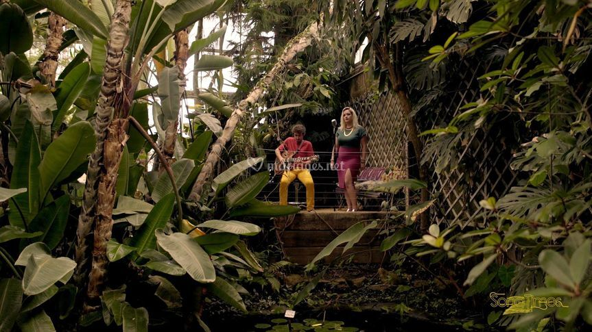 Live dans la jungle