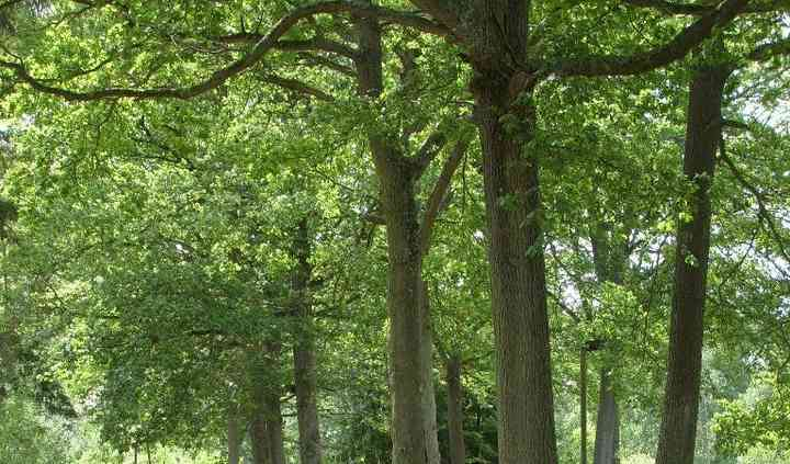 Bordé de chênes majestueux