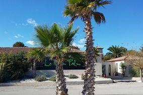 Domaine du Marin Palm