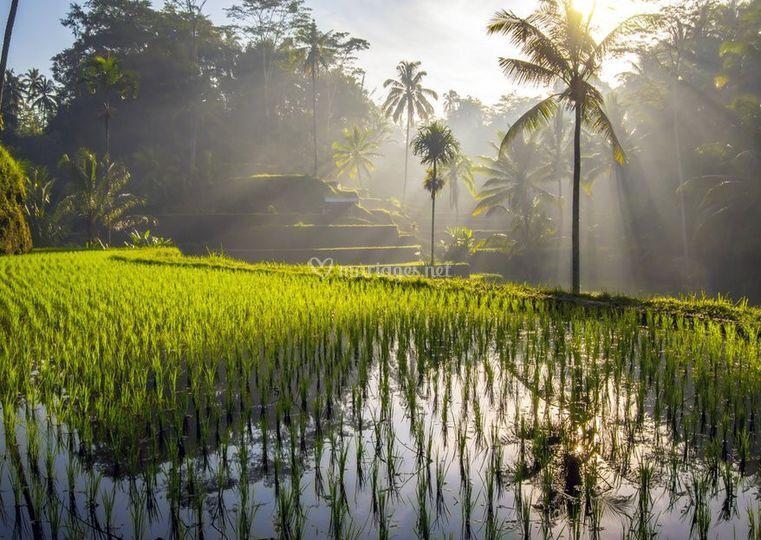 Bali, ou ailleurs