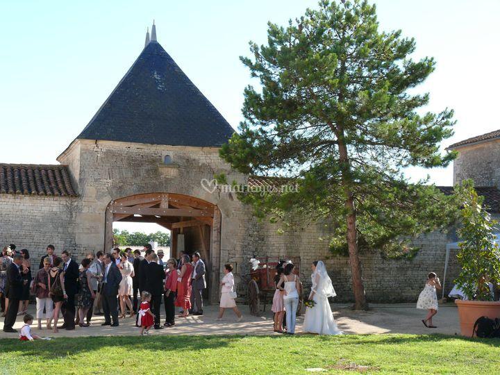 Le Pavillon et le pin parasol