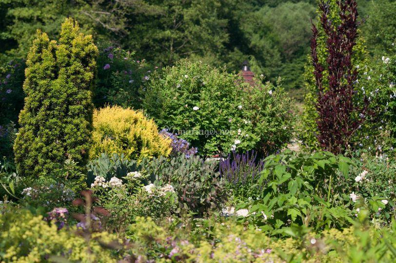 Fleurs et arbustes