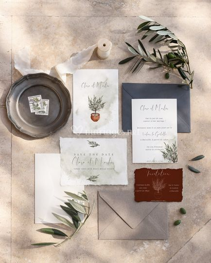 Olive tree collection