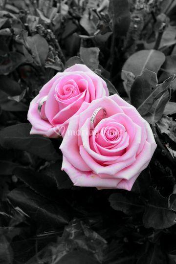 Alliance dans des roses