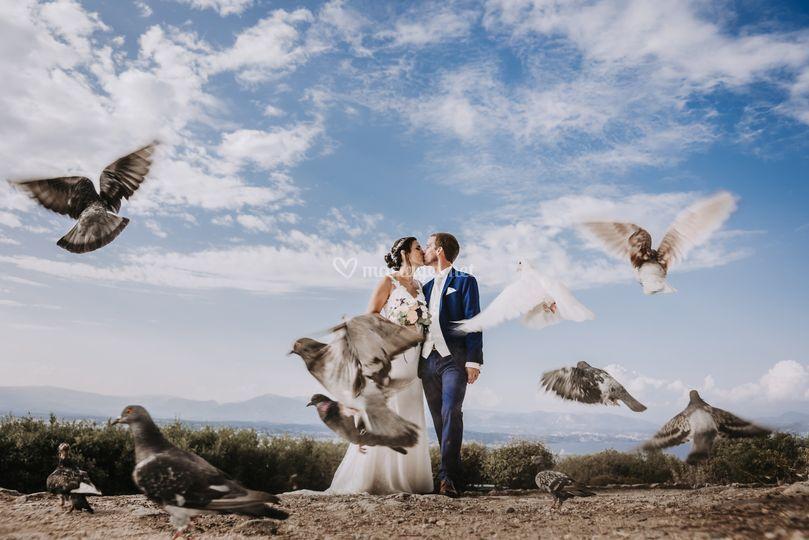Envolée de Pigeons