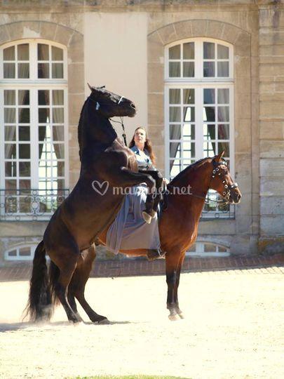 Travail avec 2 chevaux