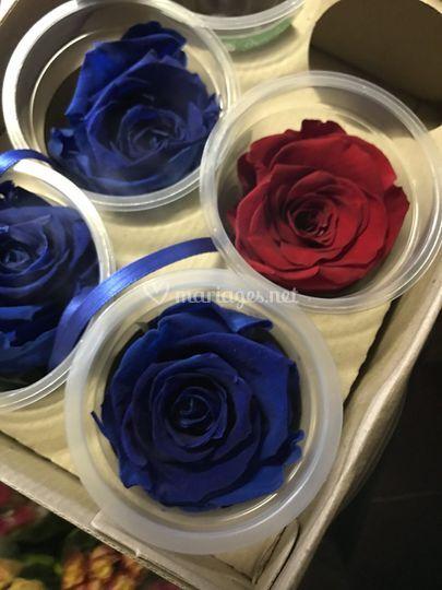 Fleur de couleur