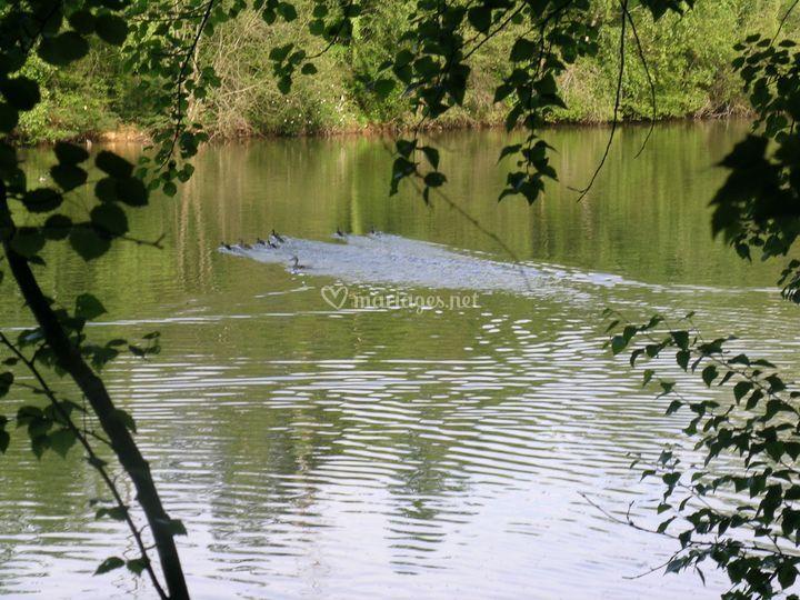 Un des étangs du domaine