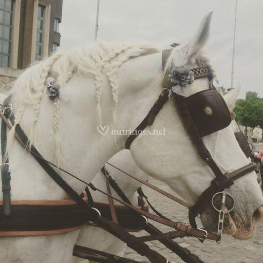Nos chevaux boulonnais